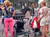Pony's rijden in Hoorn